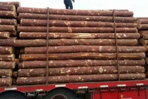 俄罗斯工贸部提议增加远东木材出口关税配额