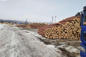 俄罗斯远东地区1-2月木材原木出口量下降27.4%