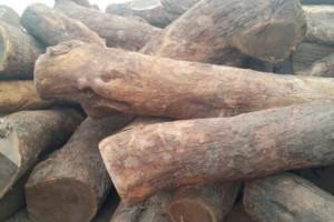优质非洲安哥拉紫檀原木,亚花梨大方批发