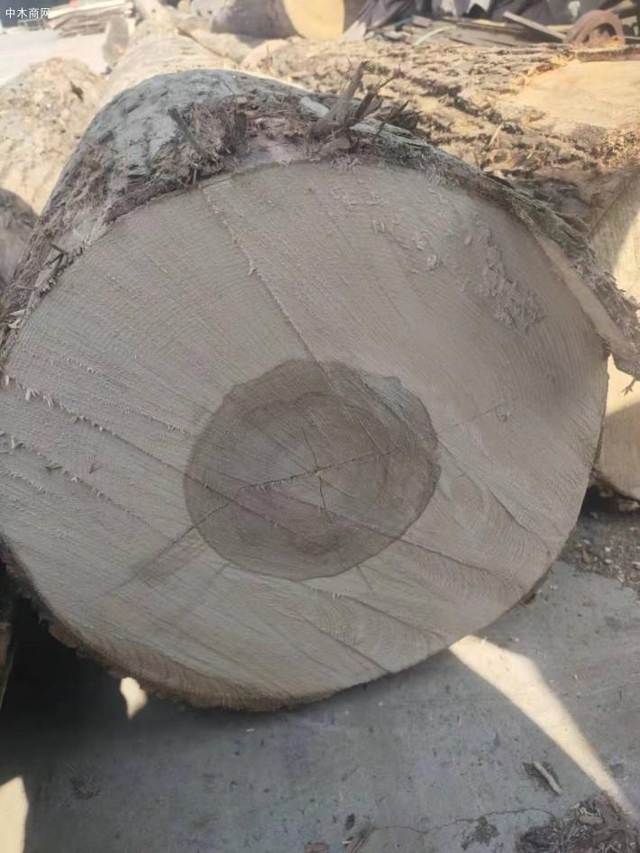 大连中信联合木业美国白蜡木原木高清图片厂家
