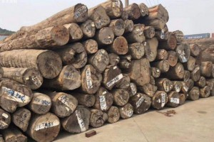 张家港木材交易市场价格行情_2020年4月8日