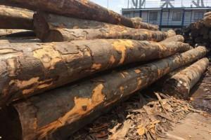 受新冠肺炎疫情影响,欧洲原木进口受阻