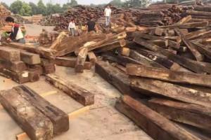 巴基斯坦黑酸枝(阔叶黄檀,大叶紫檀)原木大方原产地直销