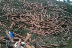 1-2月国内原木和锯材进口量降幅超两成!