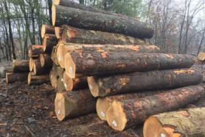 美国进口白蜡木原木木材厂家直销