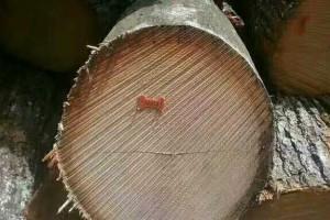宾州红橡木原木厂家直销