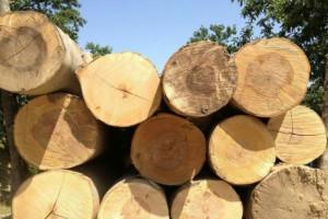 美国硬枫原木厂家直销