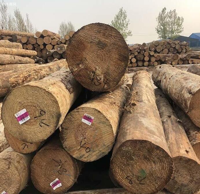 求购:辐射松原木,4米6米,直径是20~28cm