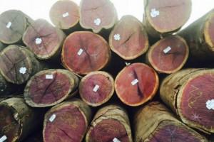 张家港原木板材走货是平常的1/3至1/4