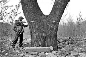 国槐已达古树标准且惨遭绳缠钉筑垃圾围