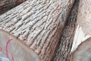 双鸭山水曲柳原木价格多少钱一立方米