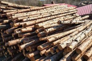 黑龙江针叶林原木材,打桩材厂家直销