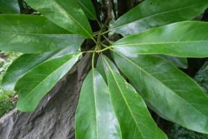 金丝楠木长什么样子及金丝楠木图片特点?