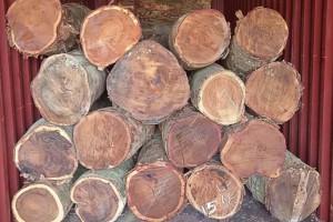 中国林产品公司境外企业多措并举保障国家木材供应稳定