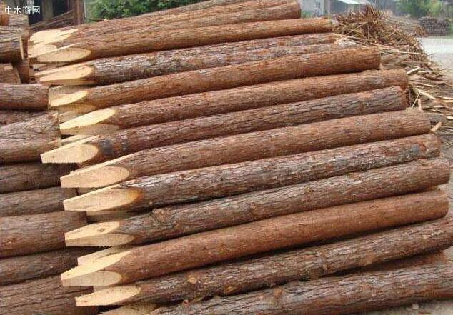 河南淮森园林绿化材料厂家批发绿化支撑杆,杉木杆,杉木桩,绿化杆图片