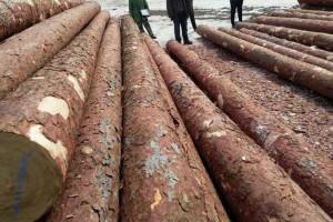 赣州国际原木板材集散中心项目建设跑出加速度