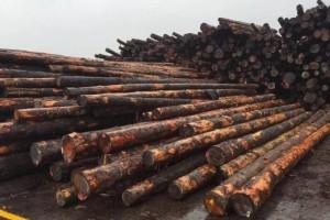 加拿大主要木材生产商几乎所有的低档产品指定运往中国
