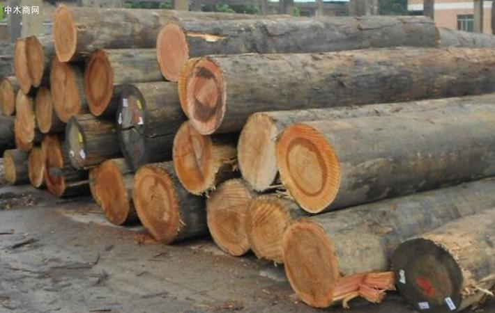 求购:白桉木原木,规格1米,2米,直径要大