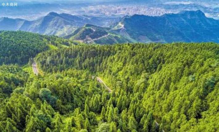 《国家林业和草原局2020年安全生产工作要点》近日印发