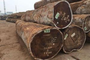 越南从非洲地区进口的木材和木制品大幅下降