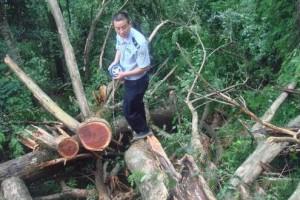 广东将重点打击非法采伐及扰乱正常木材流通秩序的行为