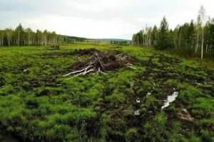 广东开展林业资源领域行业治理专项行动方案