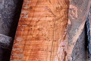 非洲白酸枝虎斑檀原木方料实物高清细节视频