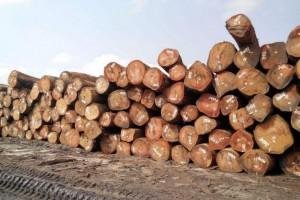 赤道几内亚奥古曼塔利等集装箱仍在正常出口和发货