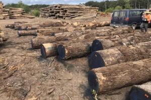 美国黑胡桃原木原产地直销