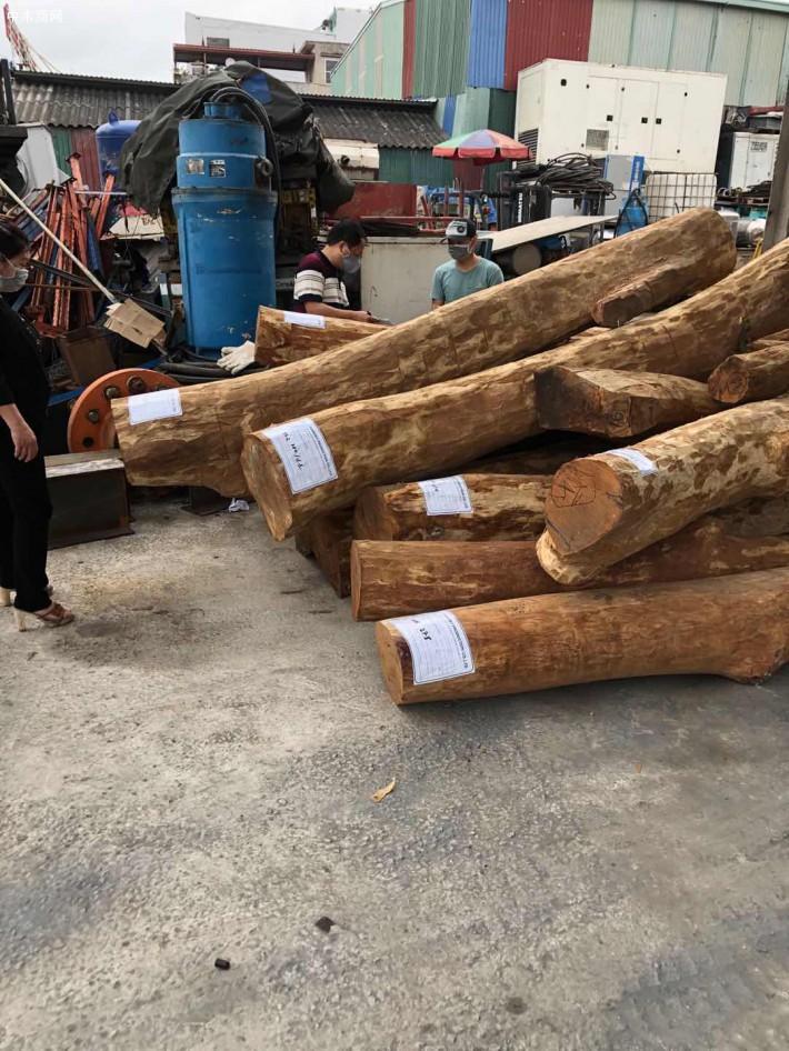越南黄花梨原木实物高清细节视频厂家