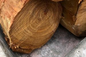 越南黄花梨原木价格多少钱一斤