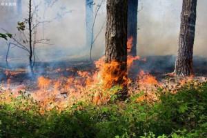 俄罗斯一周之内扑灭1201起森林火灾
