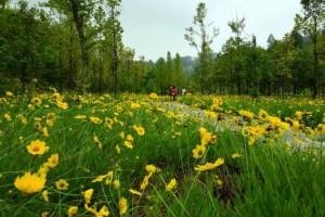 永安林业2019年亏损2.36亿亏损减少,但董事长薪酬32.18万