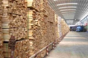 沭阳县委书记卞建军深入木材企业检查安全生产工作