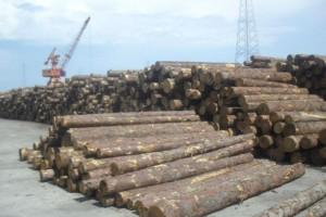 一季度我国原木锯材进口量同比下滑