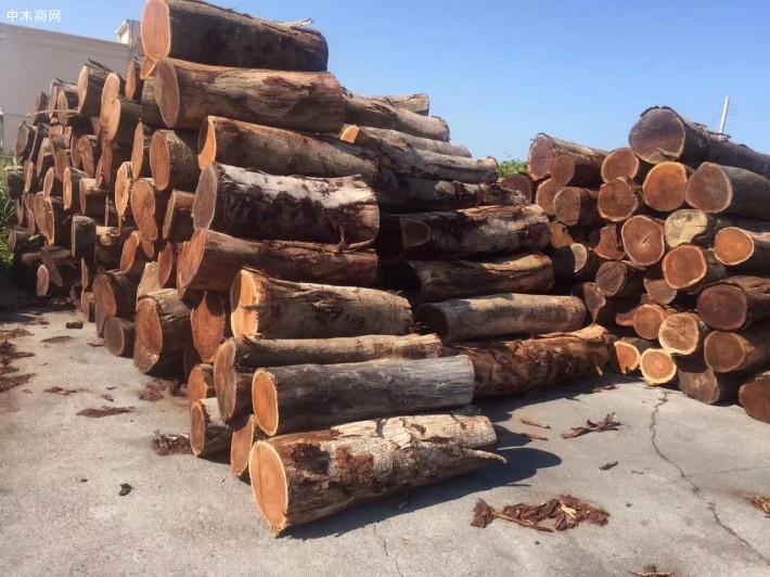 台湾酸枝_小叶相思木大径旋切级原木_台湾巧雅国际木业林场直供图片