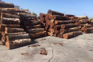 台湾酸枝_小叶相思木大径旋切级原木_台湾巧雅国际木业林场直供