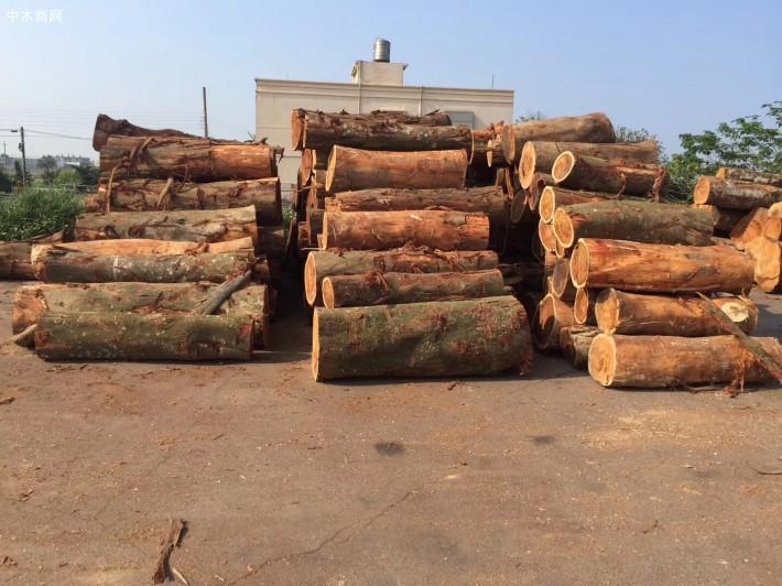 台湾酸枝_小叶相思木大径旋切级原木_台湾巧雅国际木业林场直供厂家