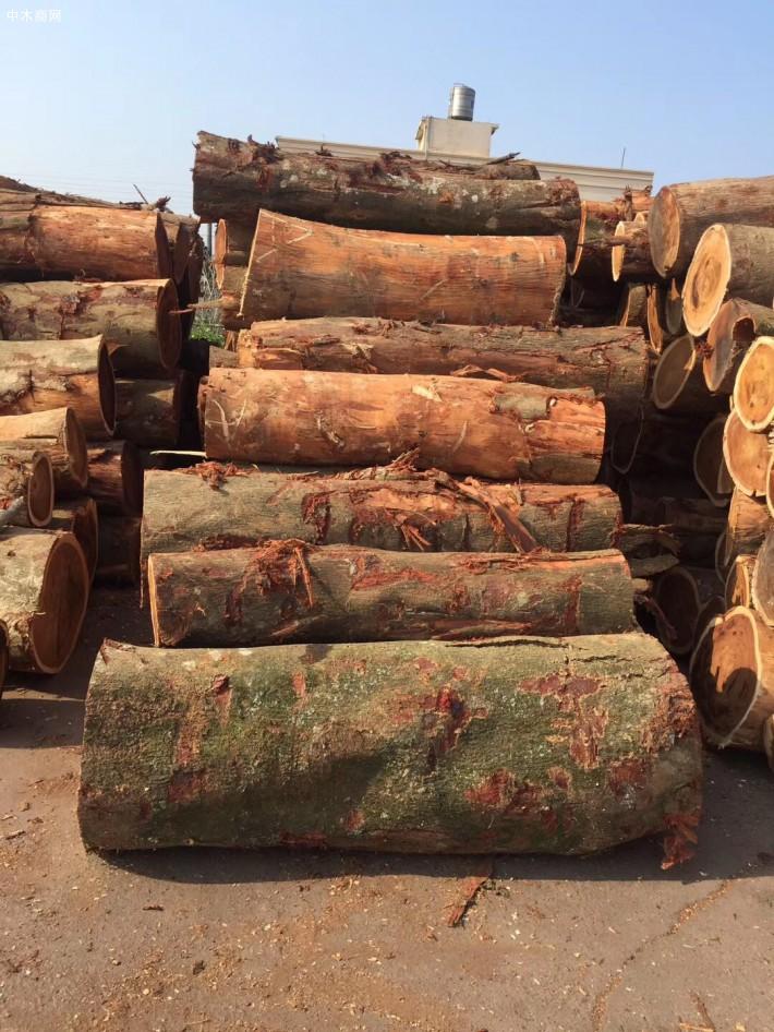 台湾酸枝_小叶相思木大径旋切级原木_台湾巧雅国际木业林场直供批发