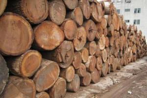 莫桑比克未来两年内暂停颁发新伐木材许可证