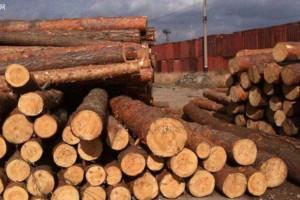 国际运输能力下滑木材补给周期有可能延长