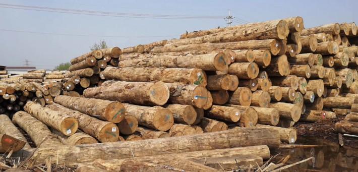 木材加工厂加工进口辐射松,白松,铁杉,花旗松工地口料品牌