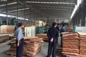 西昌市林业和草原局开展木材加工企业安全检查