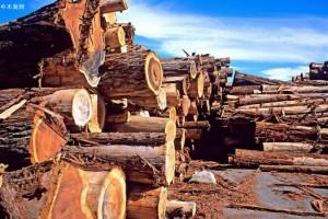 浙江温州木材公司副总经理庄惠一行到木材市场指导