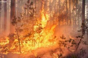 五月上旬俄罗斯森林消防部门共扑灭森林火灾900余起
