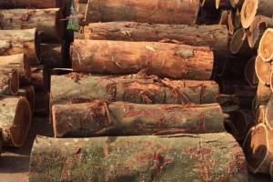 台湾酸枝木原木,小叶相思木用途及价格?