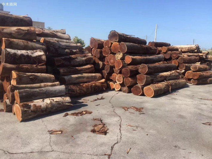 台湾酸枝木原木,小叶相思木用途及价格厂家