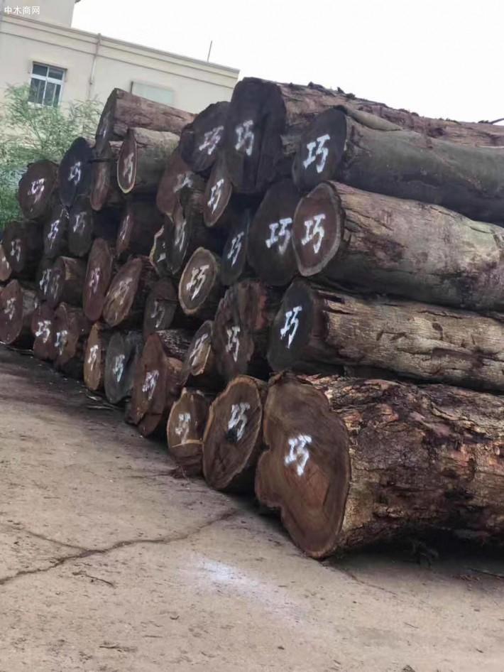 台湾酸枝木原木,小叶相思木原木生产厂家