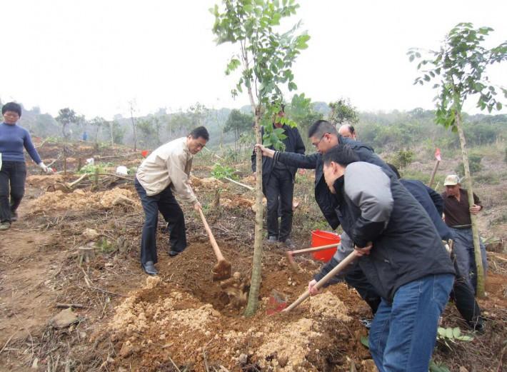 广西全区前四个月完成植树造林任务近八成
