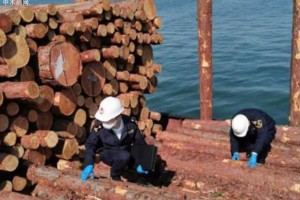 大连长兴岛海关助力进口俄罗斯原木快速通关